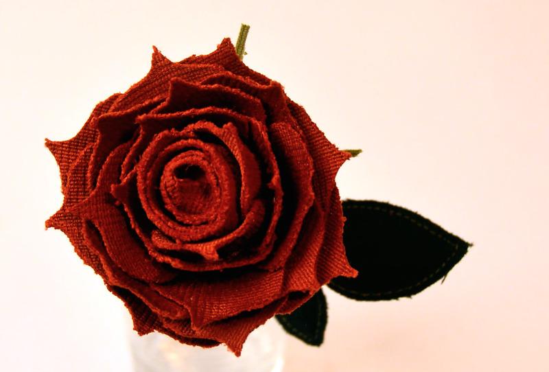 Nature - Flowering Rose